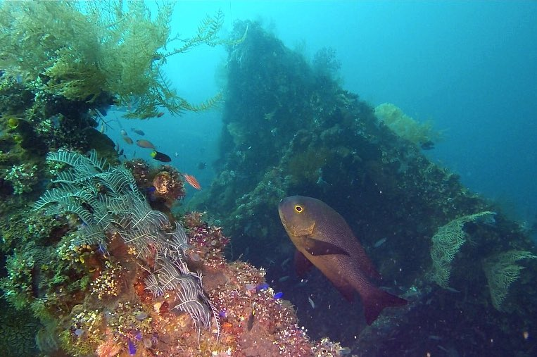 Why You Need to Do Wreck Diving Bali Next Holiday