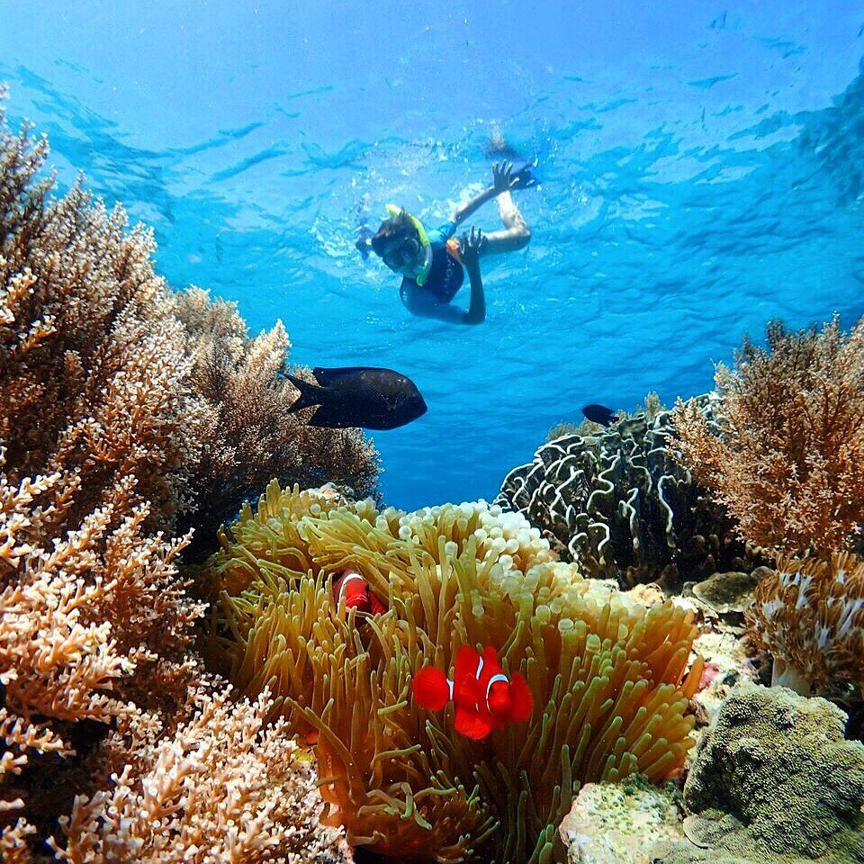 Breathtaking Indonesia Diving, Bali is One of Them!